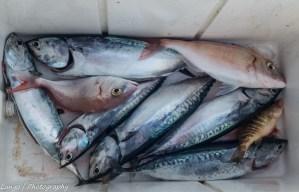 Parte del pescato