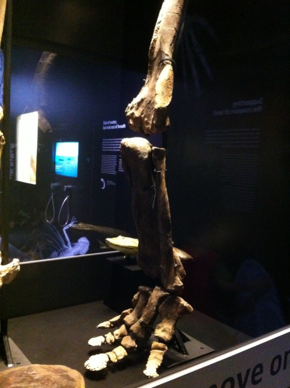 triceratops leg