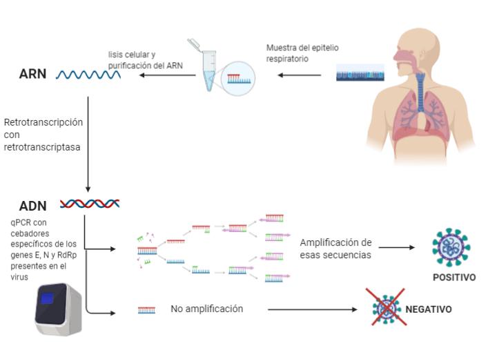 Aprende cómo se detecta un positivo por coronavirus