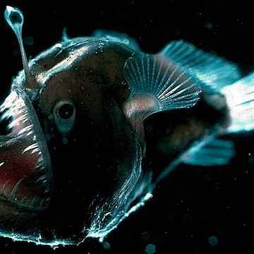 ¿A qué temperatura está el fondo de los océanos?