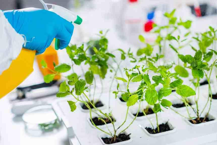 ¿Qué son los alimentos modificados genéticamente? Sus pros y contras