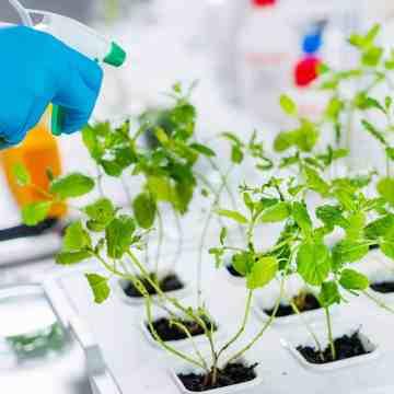 plantas siendo rociadas con herbicida