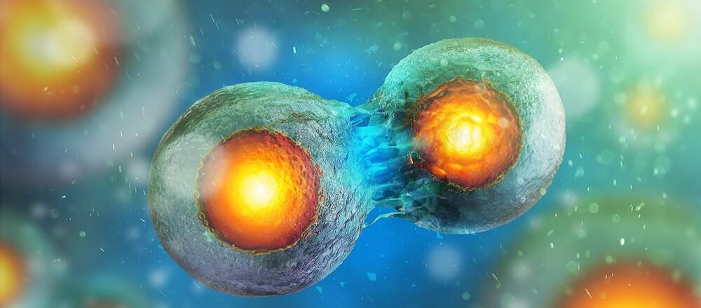 Célula tumorosa dividiendose