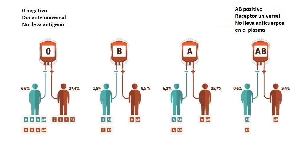 tipos de sangre tipificación de eritrocitos eritrocitos ABO anticuerpo antígeno A / B