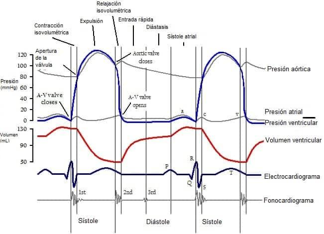 Diagrama de Wiggers