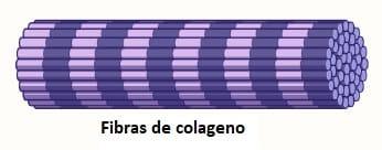 Fibras de colágeno
