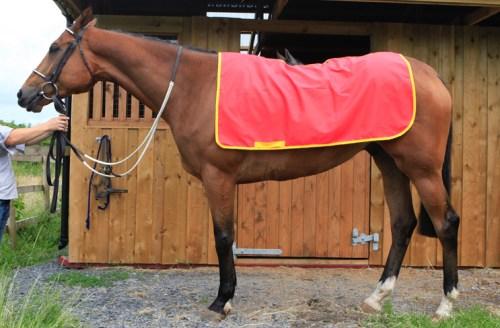 Couvre reins pour chevaux en coton