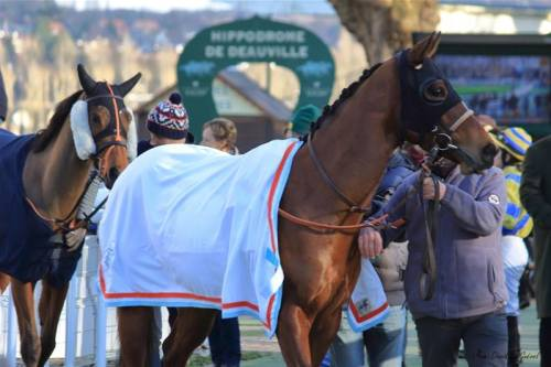chemise sechante cheval efficace