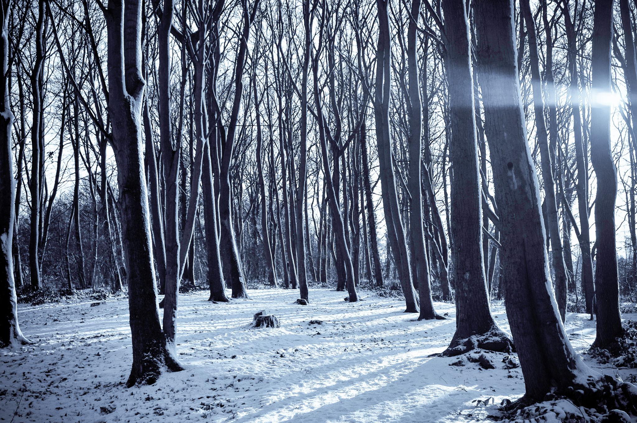 Cold_winter