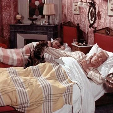 """100 años de Simone Signoret.  """"El Gato"""" Devorados por el desamor, los celos y un minino."""