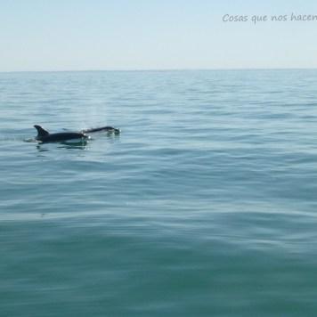 Pesca de caballas con delfines en Doñana _ Guadalquivir (5)