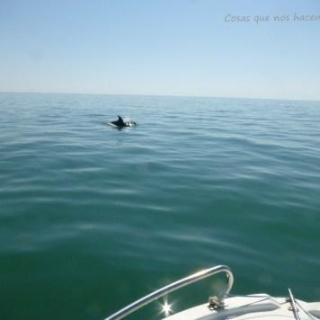 Pesca de caballas con delfines en Doñana _ Guadalquivir (6)