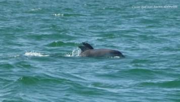 Pesca de caballas con delfines en Doñana _ Guadalquivir _ (2)