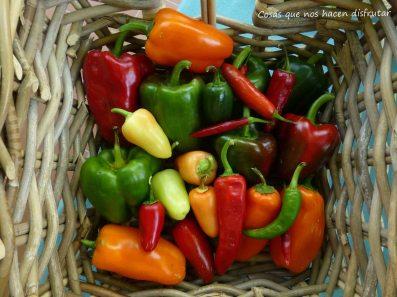 #variedad #sabor #pimientos #chile #elhuertodetialou