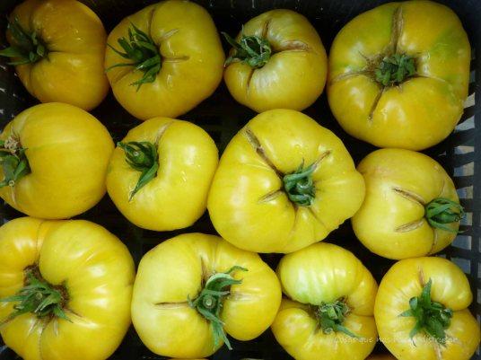 #tomatesconsabor #El huerto de Tía Lou #organic #ecologico #tomate #tomato #white #beauty