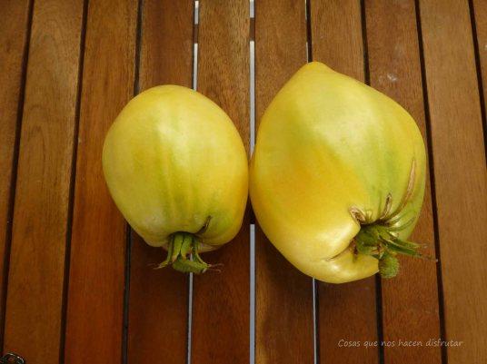 #tomatesconsabor #El huerto de Tía Lou #organic #ecologico #tomate #tomato #white #oxheart