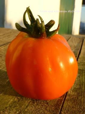 #tomatesconsabor #El huerto de Tía Lou #organic #ecologico #tomate #tomato #Aladdin's Lamp