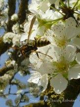 #primavera #disfrutar #belleza #campo #sonidos #olor #naturaleza #vida (6)