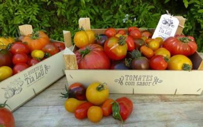 El Huerto de Tía Lou y sus 150 variedades de Tomates con Sabor. Un sueño hecho realidad.