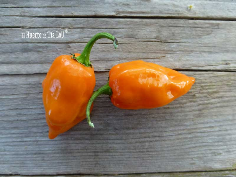 Chile Habanero Naranja