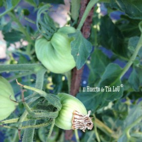 De Tomates, Huerto y Felicidad