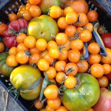 Ola de calor y tomates: Una mala combinacion