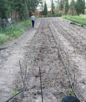 Tomates con Sabor en marcha by tia lou-4