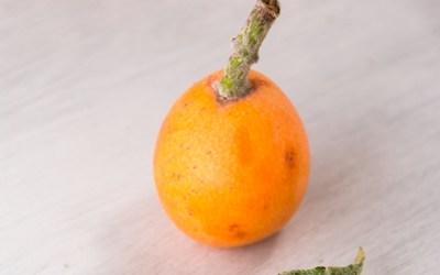 Níspero , el fruto para la operación biquini