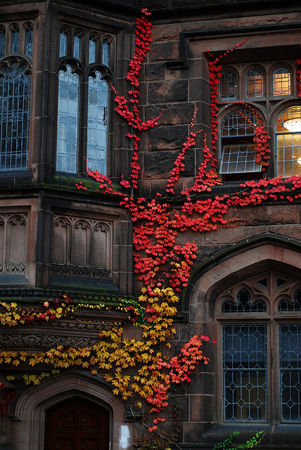 Autumn Ivy, Princeton, New Jersey