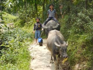 Vietnam-bambini-bufali