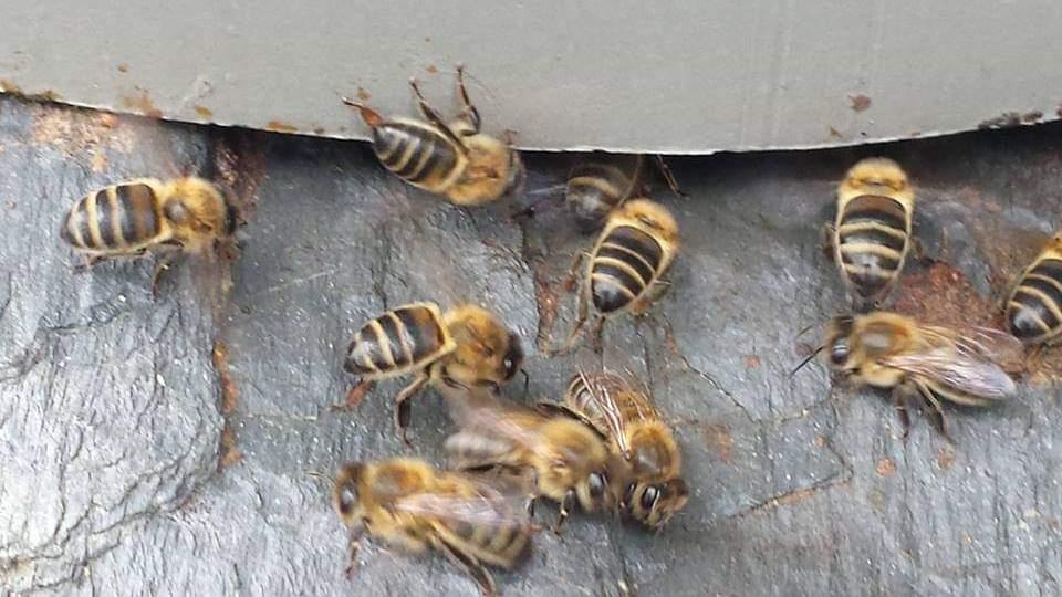 Con la desaparición de las abejas, todos los ecosistemas se verían alterados.