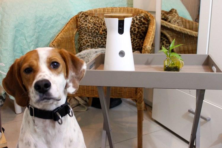 Furbo dog caméra -objet connecté -elise-and-co