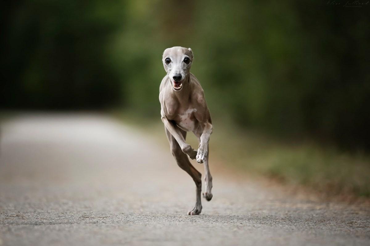 seance photo chien Lyon
