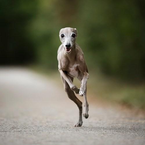 seance photo chien