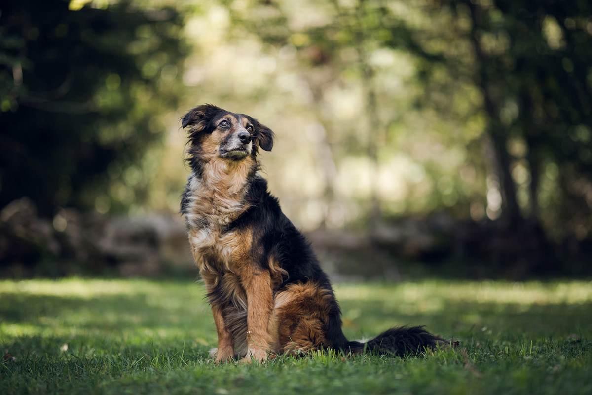 Séance photo chien