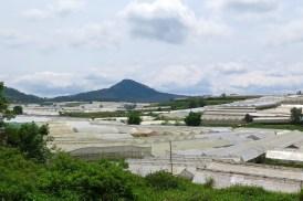 Serres Dalat Vietnam blog voyage 2016 7