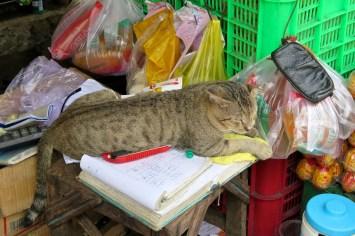 Chat comptes Hochiminh ville Vietnam blog voyage 2016 17