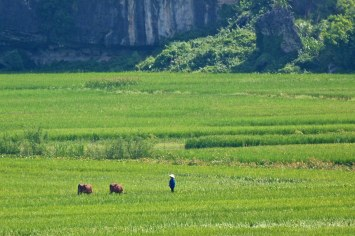 Rizieres Tam Coc Baie Halong terrestre Vietnam blog voyage 2016 2
