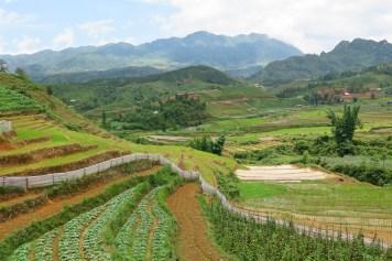 Rizières Trek Sapa Vietnam blog voyage 2016 13