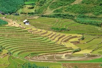 Rizières Trek Sapa Vietnam blog voyage 2016 16