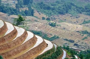 Rizières Trek Sapa Vietnam blog voyage 2016 40