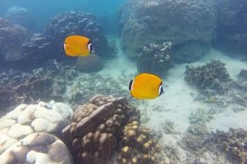 Hin Wong Beach Koh Tao Thailande blog voyage 2016 10