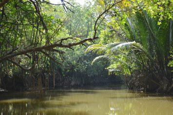 Mangrove Cherating Malaisie blog voyage 2016 17
