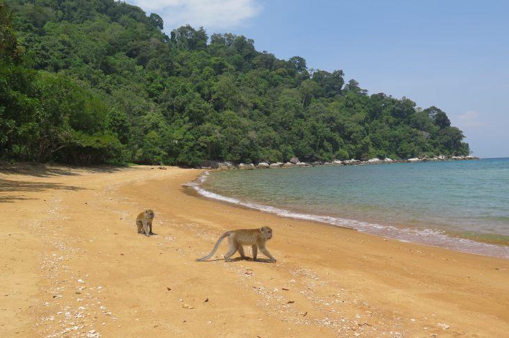 Singes à Monkey Bay