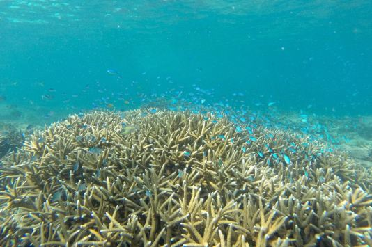 Secret beach Pulau Tioman Malaisie blog voyage 2016 15