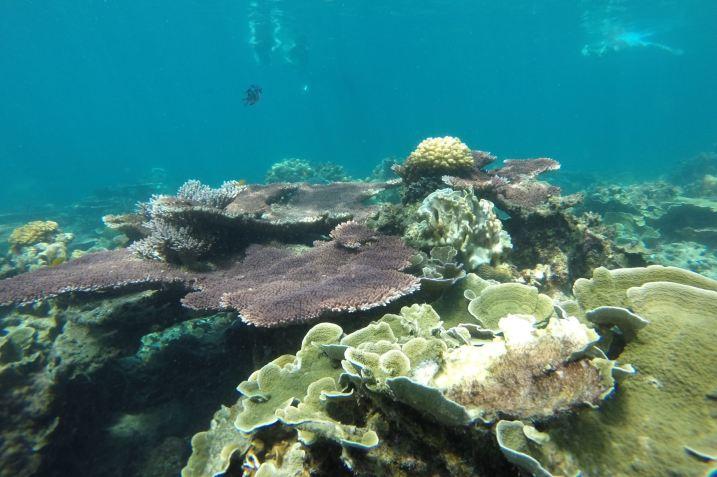 Genting Bay Palau Tioman Malaisie blog voyage 2016 21