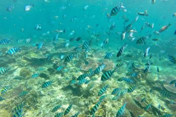 Genting Bay Palau Tioman Malaisie blog voyage 2016 22