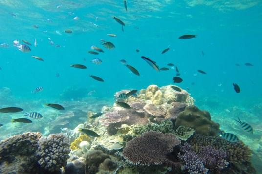 Aquarium Palau Tioman Malaisie blog voyage 2016 4