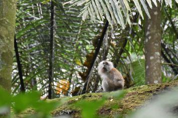 Jungle trek Palau Tioman Malaisie blog voyage 2016 37