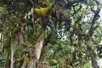 Mossy forest Tanah Rata Cameron Highlands Malaisie blog voyage 2016 16